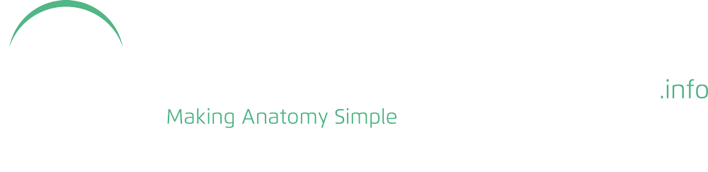 Teachmeanatomy Making Anatomy Simple