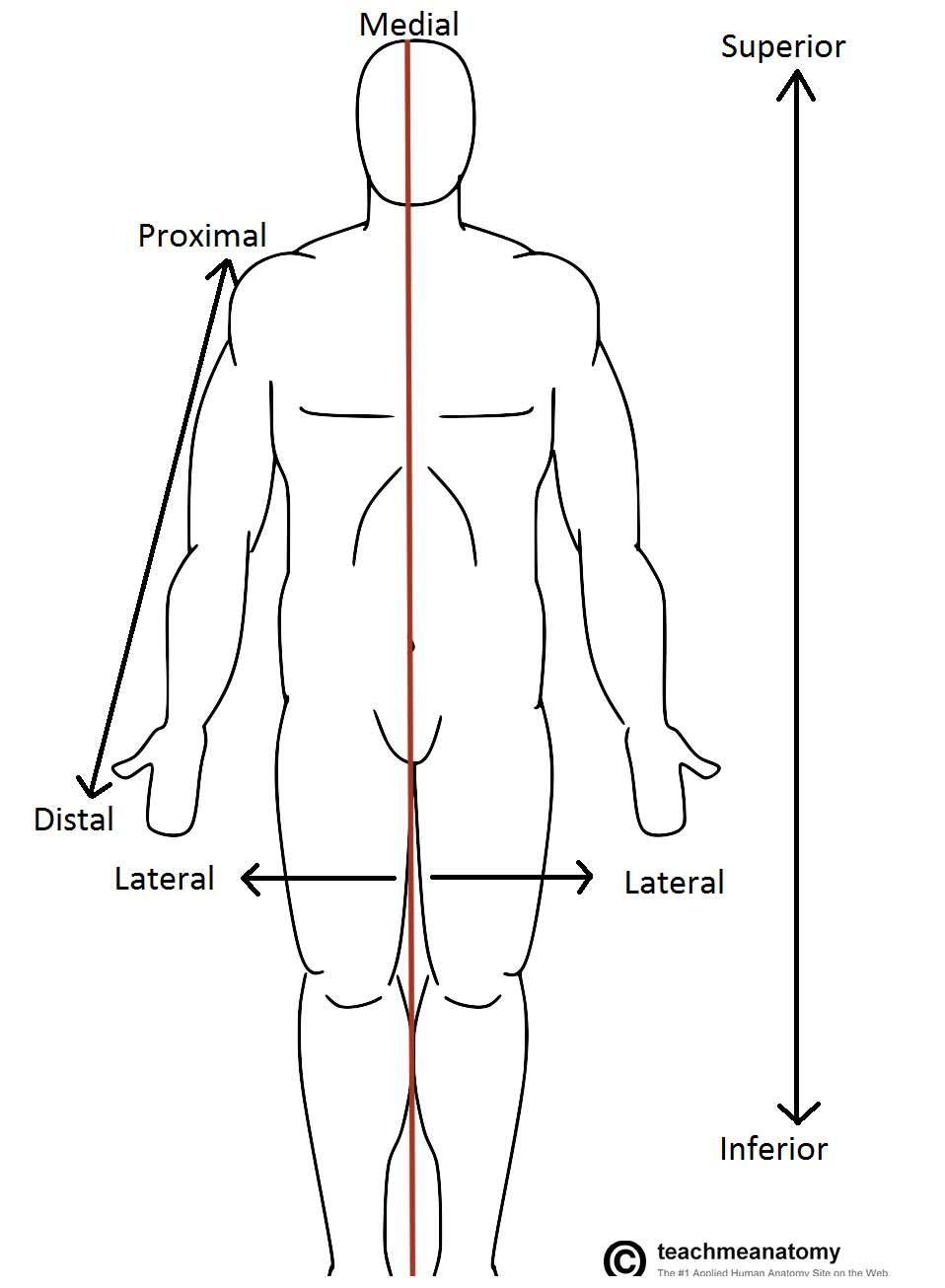 Fig 1.0 - Anatomical terms of location labelled on the anatomical position.