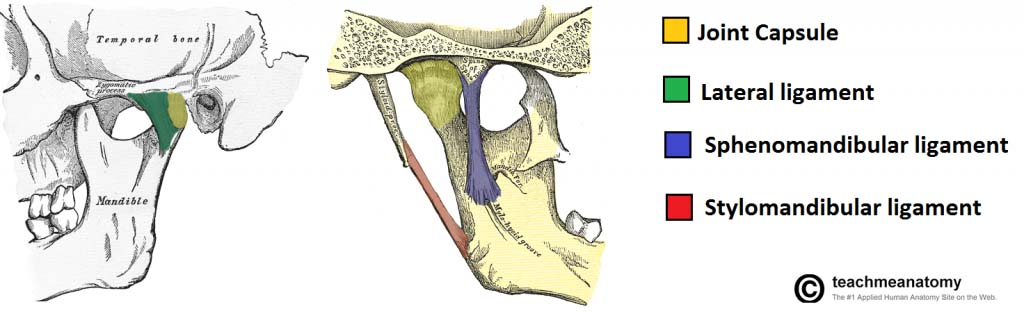 Fig 1.0 - The joint capsule and accessory ligaments of the temporomandibular joint.