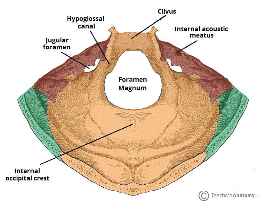 Fig 1.1 - The bony landmarks and foramina of the posterior cranial fossa.