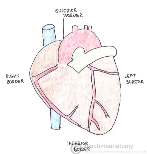 Fig 1.1 - Borders of the heart.