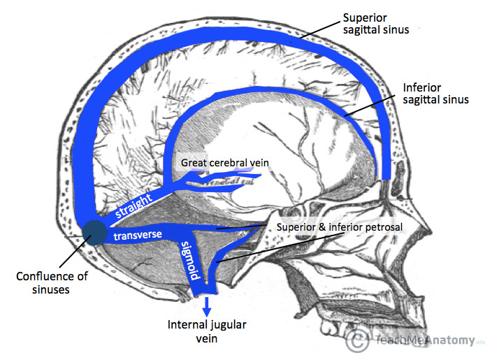 Figure 1 - Sagittal section showing the dural venous sinuses and the great cerebral vein
