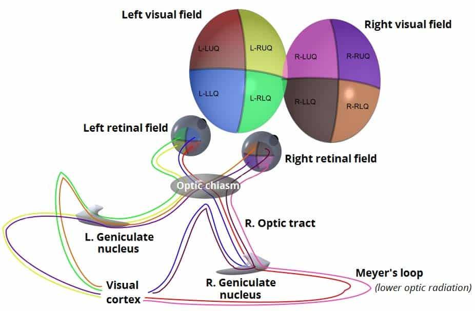 The Optic Nerve Visual Pathway Chiasm Tract Teachmeanatomy