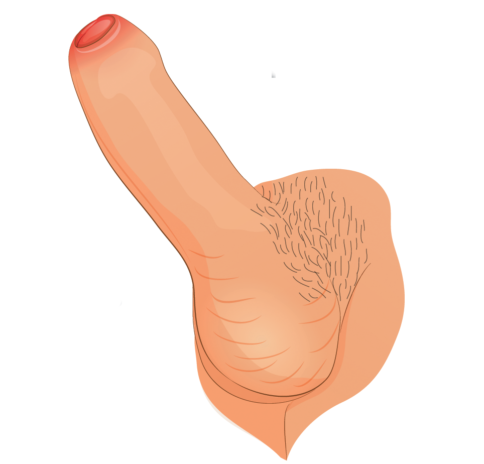 penis imens și lung)