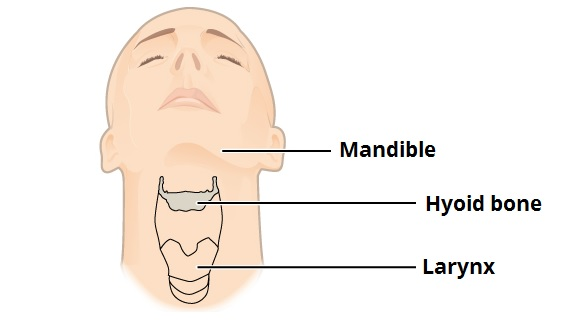 The Hyoid Bone Structure Attachments Teachmeanatomy