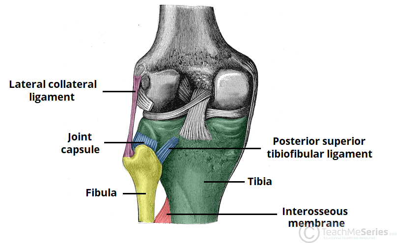 Tibiofibular Joints - Proximal - Distal - Interosseous Membrane