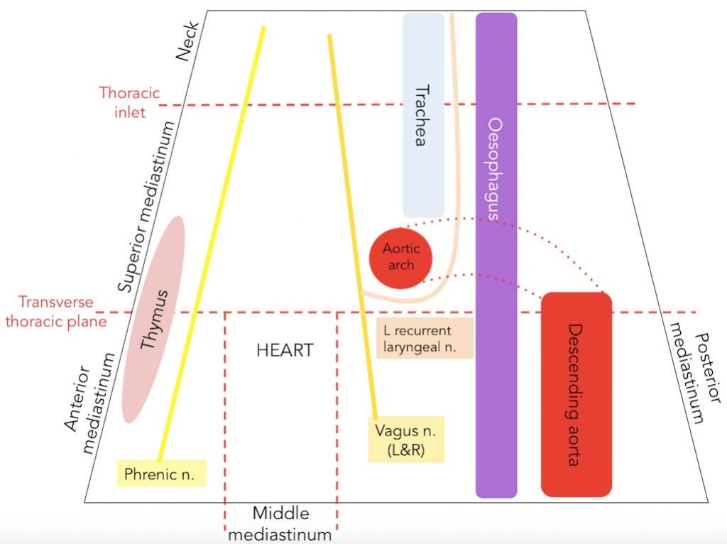 Figure 3.0 The spacial relationship of structures that pass from the superior mediastinum to neighbouring regions. Note: for easier comprehension, this schematic does not contain all structures mentioned in this article.