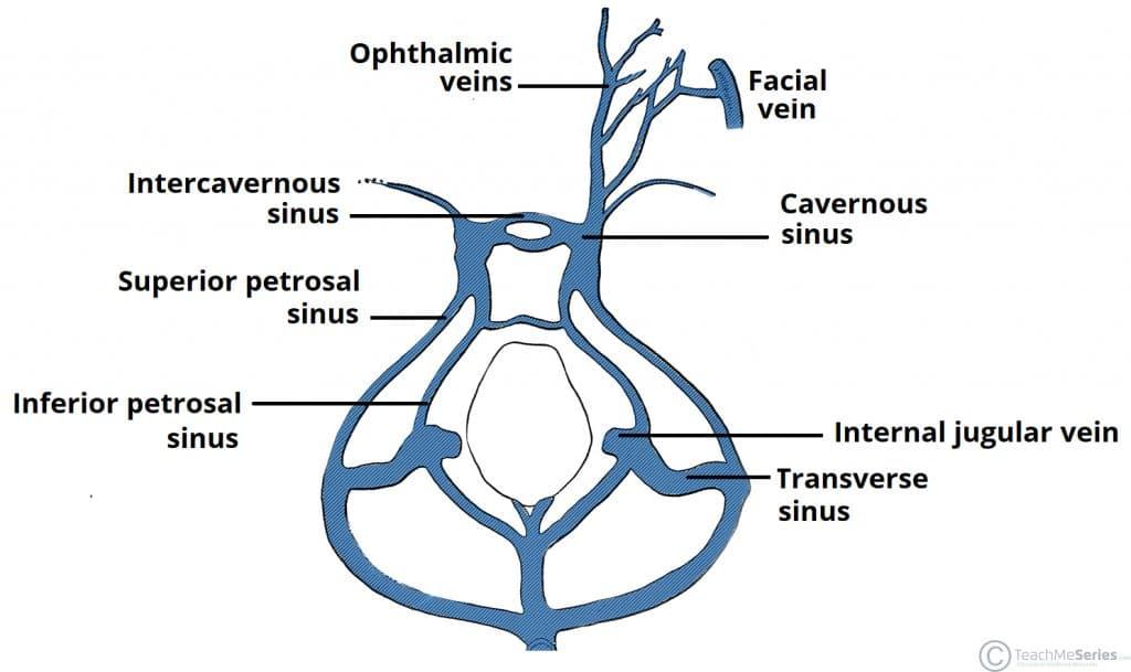 The Cavernous Sinus - Contents - Borders - Thrombosis - TeachMeAnatomy