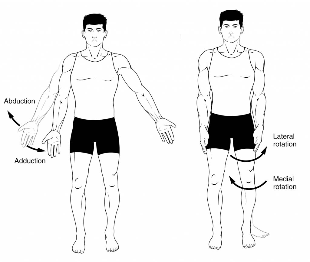 Fig 1.1 - Adduction, abduction and rotation.