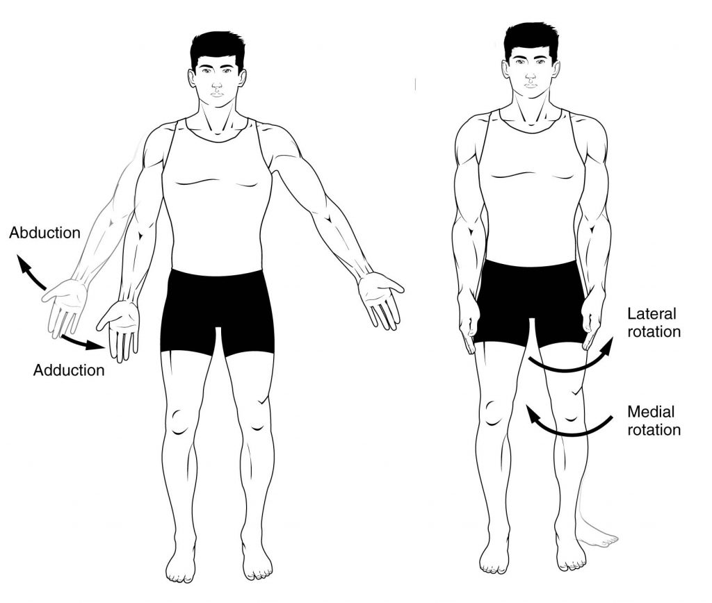 Anatomical Terms of Movement - Flexion - Rotation - TeachMeAnatomy