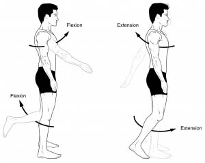 Fig 1.0 - Flexion and extension.