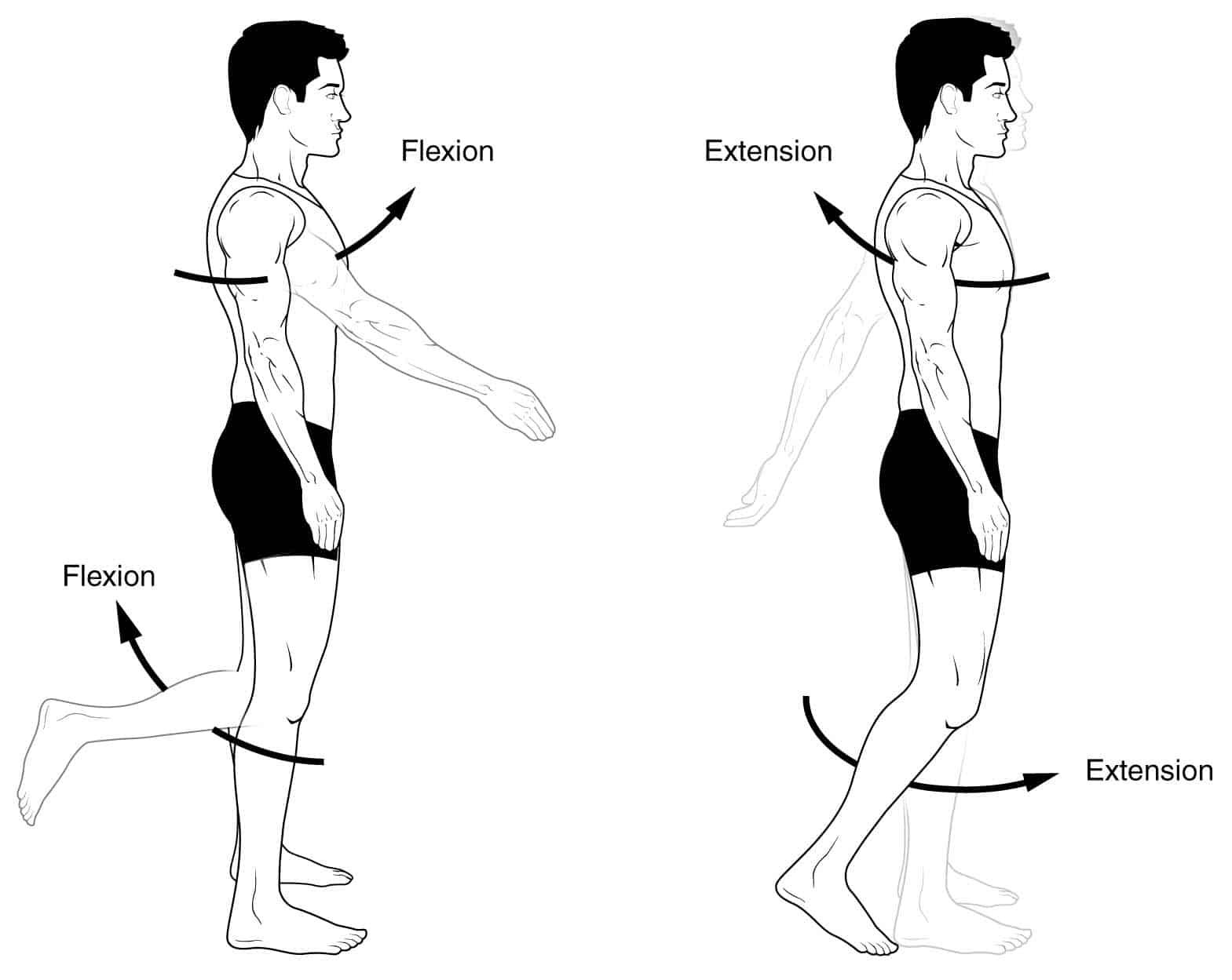 Anatomical Terms Of Movement Flexion Rotation Teachmeanatomy