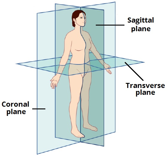 Fig 1 - The anatomical planes of the human body.