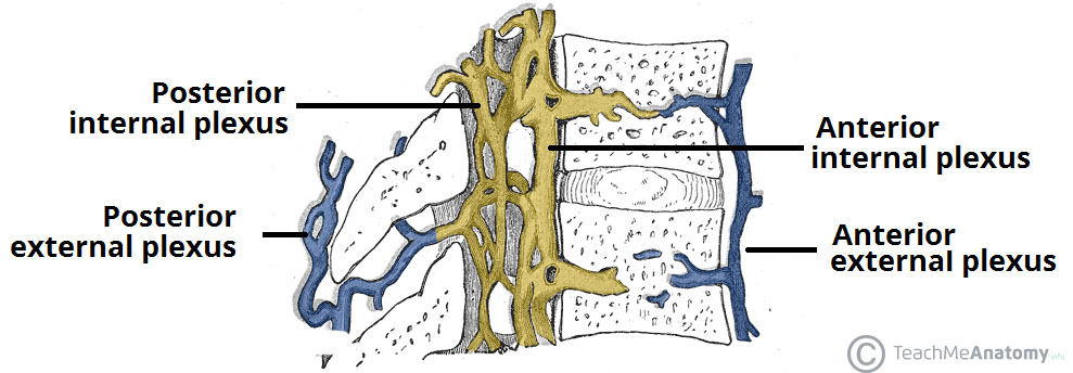 Fig 2 - The external and internal vertebral plexuses.